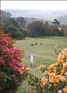 The Queen Elizabeth Luxury Safari
