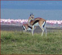 The Flamingo Luxury Safari